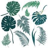 Tropische bladeren, en varenelementen op witte achtergrond Stock Afbeeldingen