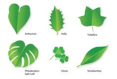 Tropische Bladeren met Botanische namen Royalty-vrije Stock Fotografie