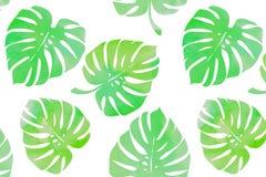 Tropische bladeren, monsterapatroon Royalty-vrije Stock Fotografie