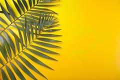 Tropische bladeren op gele achtergrond Minimaal concept Vlak leg De ruimte van het exemplaar royalty-vrije stock afbeeldingen
