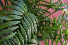 Tropische bladeren op pastelkleur roze achtergrond Bloemen achtergrond royalty-vrije stock fotografie