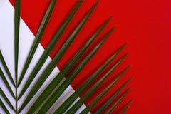 Tropische bladeren op rode en witte achtergrond Samenvatting Minimaal bedrieg Stock Foto's