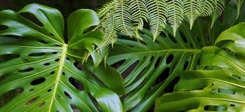 Tropische bladerenachtergrond Stock Foto's