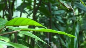 Tropische bladerenachtergrond Botanisch tuinblad stock video