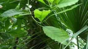 Tropische bladerenachtergrond Botanisch tuinblad stock footage