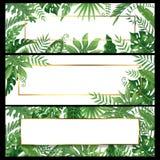 Tropische bladerenbanners De exotische palmbladbanner, de de natuurlijke kaders en wildernis van de kokospalmentak planten vector royalty-vrije illustratie