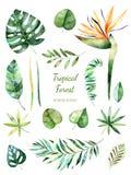 Tropische Bladinzameling Met de hand geschilderde waterverf bloemenelementen Waterverfbladeren, takken, bloem Stock Fotografie