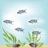 Tropische blaue Fische Lizenzfreies Stockfoto