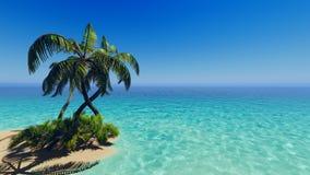 Tropische blaue Seepalmen Stockfotografie