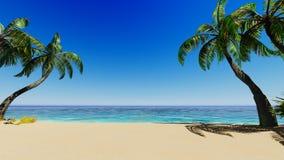 Tropische blaue Seepalmen Stockfotos