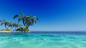 Tropische blaue Seepalmen Stockbild