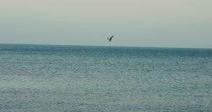 Tropische blauwe oceaan naar mooi stock video