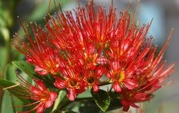 Tropische bloem Stock Foto's