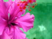 Tropische bloem Stock Foto