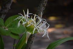Tropische Bloem stock afbeelding