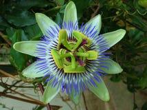 Tropische bloem in Cocora-Vallei royalty-vrije stock afbeeldingen