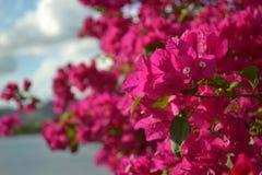 Tropische bloem dichte omhooggaand Stock Foto's