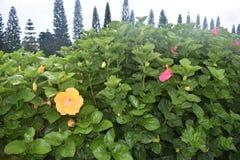 Tropische Bloem met heldere levendige kleuren stock foto