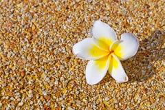 Tropische bloemachtergrond Stock Foto's