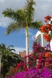 Tropische bloemdroom Stock Afbeeldingen