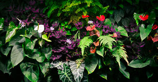 Tropische bloemen Stock Afbeeldingen