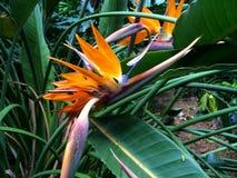 Tropische Bloemen stock afbeelding