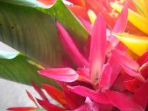 Tropische Bloemen royalty-vrije stock foto
