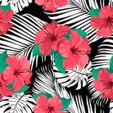 Tropische bloemen en bladeren op achtergrond Stock Afbeelding