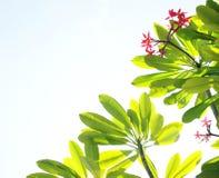 Tropische bloemen en hemelachtergrond stock foto