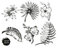 tropische Bloemen en Palm Royalty-vrije Stock Afbeeldingen