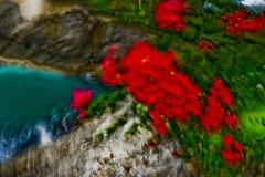 Tropische Bloemen met Motieonduidelijk beeld Royalty-vrije Stock Afbeeldingen