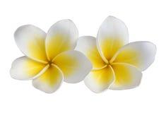 Tropische bloemen op wit Royalty-vrije Stock Afbeelding