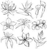 Tropische bloemen - schetsstijl Stock Afbeeldingen