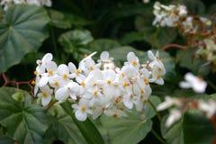 Tropische Blume stockbild
