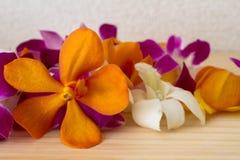 Tropische Blume Stockfoto