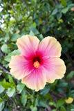 Tropische Blume Stockbilder