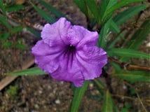 Tropische Blume in der Dominikanischen Republik stockbilder