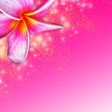 Tropische Blume des Plumeria Stockfoto