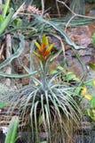 Tropische Blume in einem Garten Stockfoto