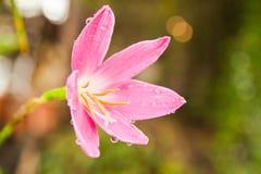 Tropische Blumen Stockbild