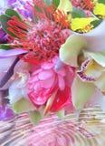 Tropische Blumen stockfotos
