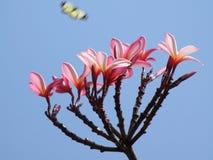 Tropische Blumen Stockfoto