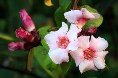 Tropische Blumen Lizenzfreies Stockfoto