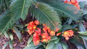 Tropische Blumen Stockfotografie