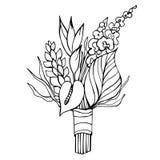 Tropische Blumen Auch im corel abgehobenen Betrag Stockfoto
