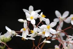 Tropische Blumen, Costa Rica Lizenzfreie Stockfotos