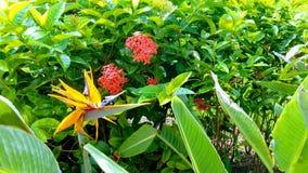 Tropische Blumen in der Blüte außerhalb des großartigen Oasen-Hotels Tulum stockfotografie