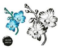 Tropische Blumen in der Skizze Stockfoto