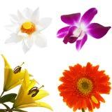 Tropische Blumen eingestellt stockfotografie
