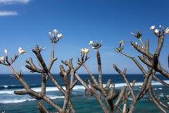 Tropische Blumen am Strand stockfotos